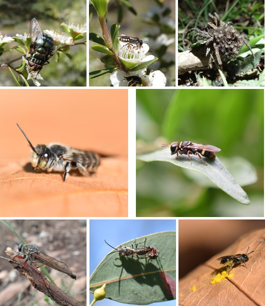 Insects_Blog_FT