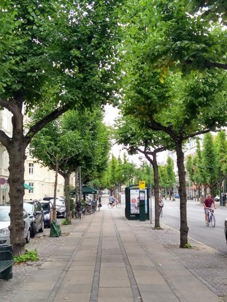 Danish Street Trees